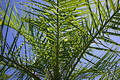 Looking from within palm tree Stock Images