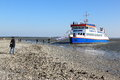 Looking for shelves on sandbank in waddensea holland the seals boat is especially designed the wad this means that the ship is Royalty Free Stock Images