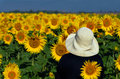 Looking at sunflowers Royalty Free Stock Images