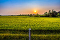 Looking at sunset the post is standing in front of the green field Royalty Free Stock Photos