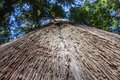 Looking up a California redwood tree Royalty Free Stock Photo