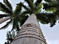 Looking Up at the Tall Palm Tree Royalty Free Stock Photo