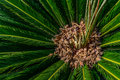 Looking Up To Palm Tree. Green texture background Royalty Free Stock Photo