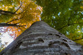 Looking up a tree and seeing the bark with green and yellow leav Royalty Free Stock Photo