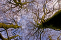 Looking Up Winter Tree Canopy