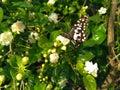 Hľadá veľmi krásny a kvety