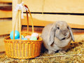 Lop earred rabbit gray and easter basket on hayloft Stock Image