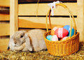 Lop earred rabbit gray and easter basket on hayloft Royalty Free Stock Photos