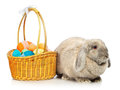 Lop earred rabbit gray and easter basket isolated on white Royalty Free Stock Image
