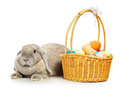 Lop earred rabbit gray and easter basket on white Stock Image