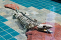 LOS ANGELES, CALIFORNIA/USA - JULY 28 : Alligator skeleton under Royalty Free Stock Photo