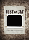 Lost cat Royalty Free Stock Photo