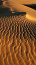 Lost in the desert Royalty Free Stock Photo