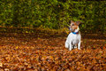 Lost dog run away in the park now it is and can not be found Stock Photography