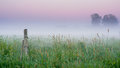 Lost in nature it is dawn and the fog is heavy over this meadow Stock Photography
