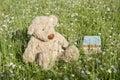 Lost Teddy Bear Outdoors
