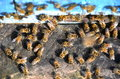 A lot of bees entering a beehive Stock Image
