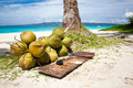 A lot of Coconuts on  beach Royalty Free Stock Photos