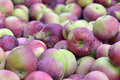 Lot of empire apple apples picked in autumn Stock Photos