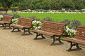 Lot empty wooden benches park Royalty Free Stock Photos