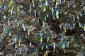 A lot of ribbons in the colors of the Ukrainian national flag adorn the branches of a tree. Performance for EuroMaida Royalty Free Stock Photo