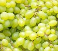 Lot of ripe green grapes. Royalty Free Stock Photo