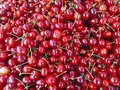 A lot of ripe sweet cherries Royalty Free Stock Photo
