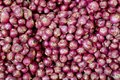 A lot of thai shallot separated for background red color Royalty Free Stock Photo