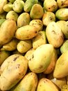 stock image of  lot of yellow mango fruit in a market