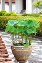 Lotosowego kwiatu garnek Zdjęcie Stock