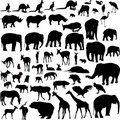 Lots of Animal silhouettes Royalty Free Stock Photos