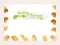 Lots of baby chicken on a frame Royalty Free Stock Photos