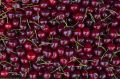 Lots of cherries in a market. Stock Photography