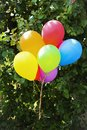 stock image of  Lots of colored balloons close-up hovering on the background of green leaves