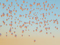 Lots of golden balloons flying up to the sky shiny Royalty Free Stock Images