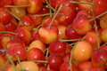 Lots of Rainier Cherries Royalty Free Stock Photo