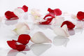 Lots of rose petals over white background Stock Photo
