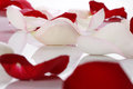 Lots of rose petals over white background Stock Images