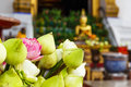 Lotus bud in thailand temple the Stock Photo