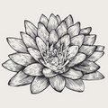 Lotus, floral design element, Stock Photos