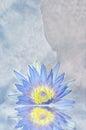 Lotus Flower And Buddha