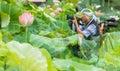 Lotus flower folk songs june in nanchang photographer near pond Stock Image
