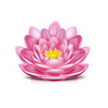 Lotus flower isolated on white background Stock Images