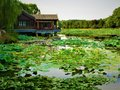 Lotus, lake, nature, environment and traditional Chinese house Royalty Free Stock Photo
