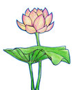 Lotus flower and leaf drawn by hand with crayons colored pencils isolated on white background Stock Photos