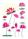Lotus flower set colorful icon design Stock Images