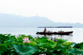 Lotus in full bloom west lake in hangzhou Royalty Free Stock Images