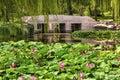 Lotus Garden Reflection Bridge Summer Palace Beijing China Royalty Free Stock Photo