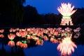 Lotus Lantern On Water