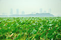 Lotus leaf and city nanjing xuanwu lake side of the Royalty Free Stock Photography